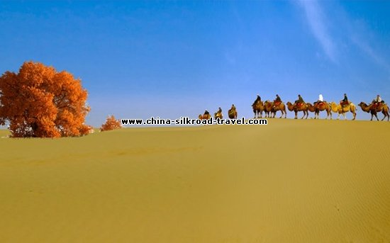Day Tour to Dawakun Desert