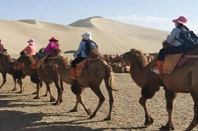 Dunhuang Camel Riding