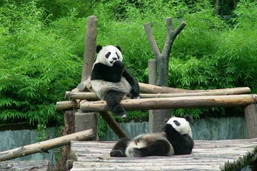 10 Days Great Wall and Pandas Tour